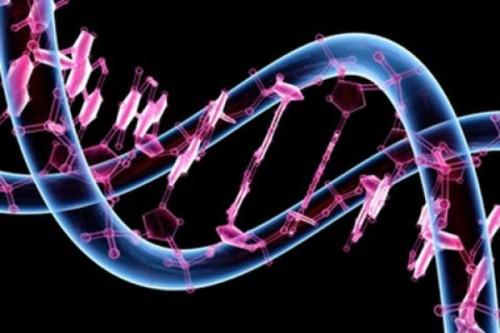 genoma%20humano28140552