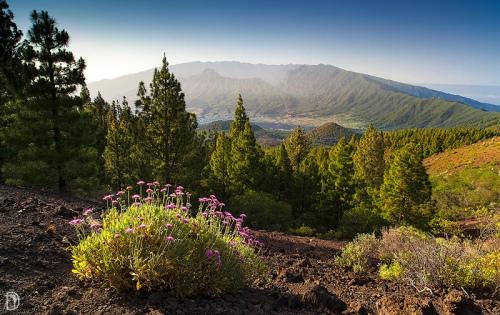 Vista desde la Ruta de Los Volcanes