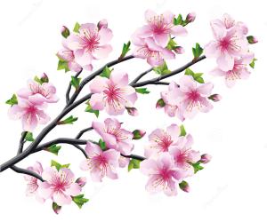 cerezo japonés