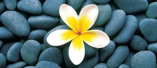 Flor entre piedras