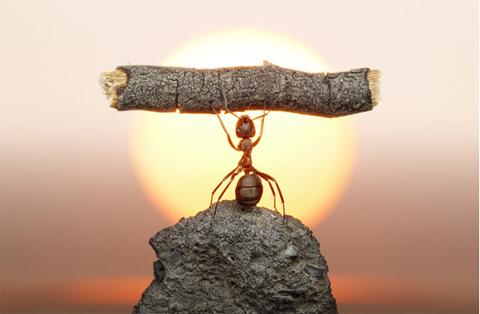 resiliencia-superar-adversidades-enfrentar-vida