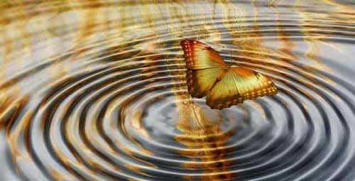 mariposa-y-ondas