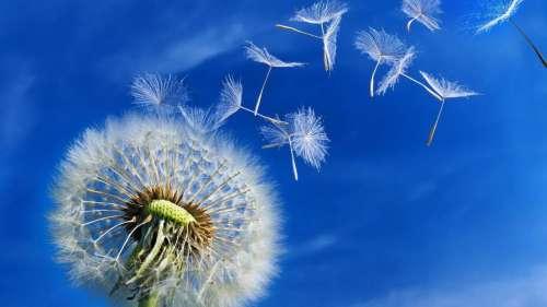 semillas-al-viento